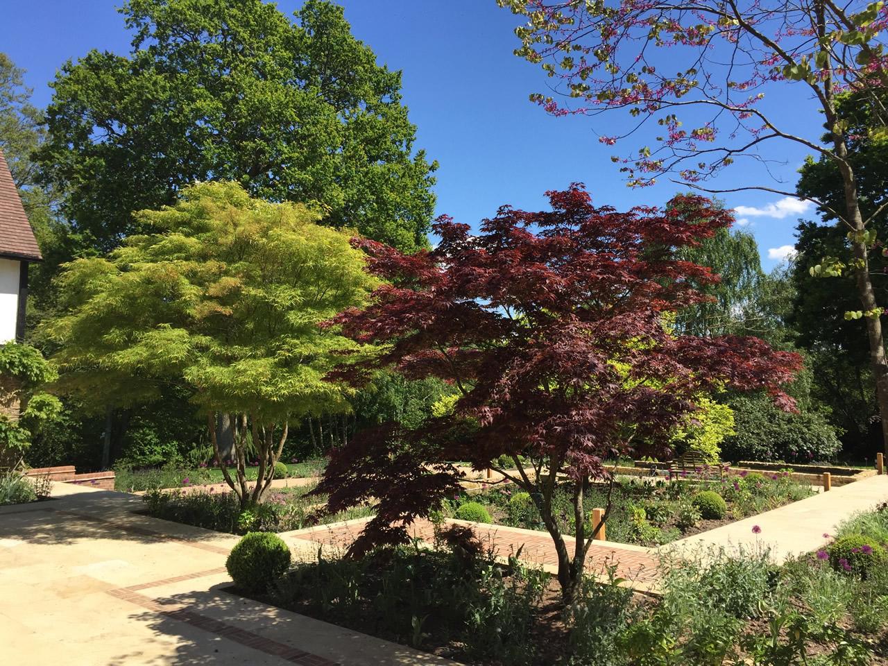 Acers in Water Garden